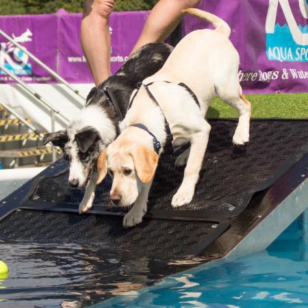 K9 Aquasports