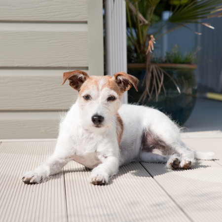 YOUR DOG DESERVES A HOLIDAY TOO! DOG FRIENDLY BREAKS WITH SHOREFIELD HOLIDAYS image