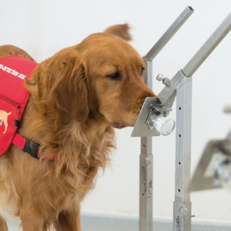 DOGS SAVING LIVES… ONE SNIFF AT A TIME. MEDICAL DETECTION DOGS image