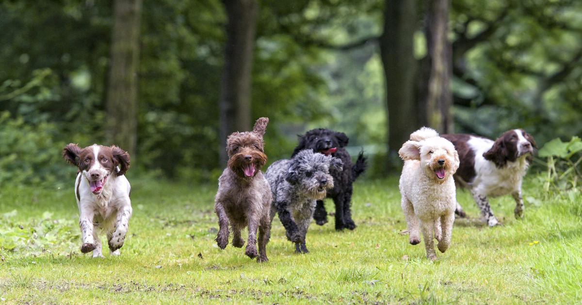 Dogstival | Visiting Information for Dogstival 2020 | The ...