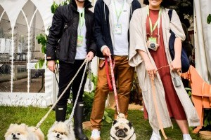 Dogstival 2019