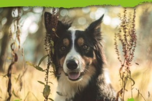 Dogstival Dog Model Winner 2020