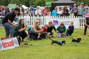 Nippers Terrier and Lurcher show