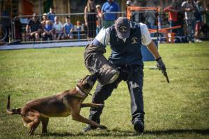 Shadowquest dog display team dogstival