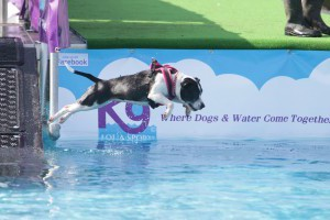 Dogstival K9 Aquasports Dock and Dive Pool